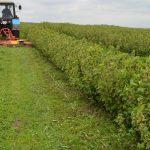 kosiarka-sadownicza-weremczuk-plantacje-jagodowe