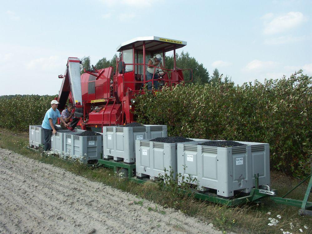 maszyna-do-zbioru-owocow-jagodowych
