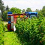 harvester-for-red-raspberries
