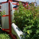 red-raspberry-harvester