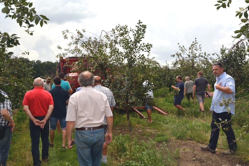 Display of sour cherries harvesting