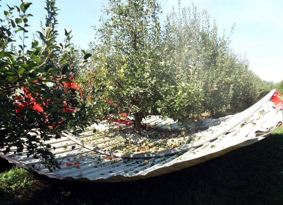 Maszyna do otrząsania jabłek