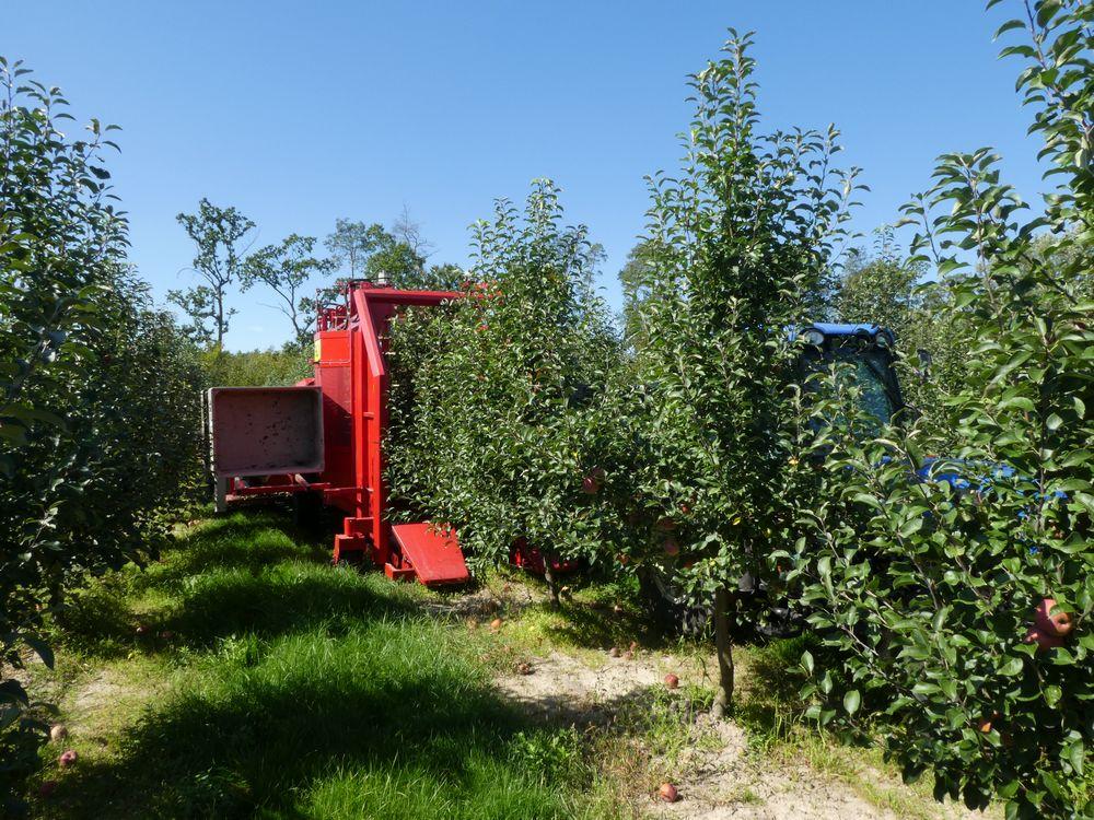 Zbiór jabłek kombajnem FELIX-Z